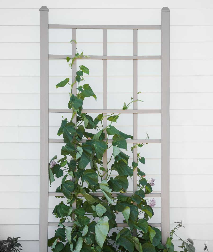 Cottage Trellis